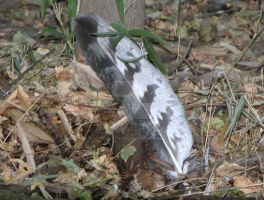 Harpy Eagle Feather by ManitouWolf