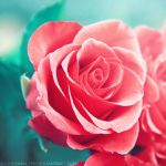 close to you by illusionality