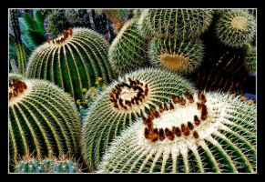 Golden barrel cactus by DeviantDrax