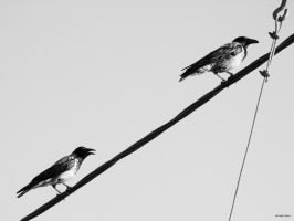 Two Crows by ivagoth