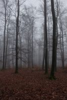 Foggy Forest 10 by sacral-stock