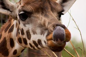 I can lick my nose by mfunston