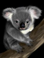 Koala for AngelFire1 by Kaya-STrissa