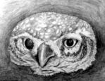 The owl by Twimper