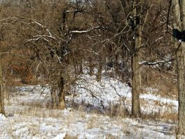 Snowy Woods I by Baq-Stock