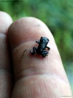 Quaddie_s Froglet by In-the-picture