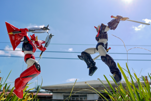 Garden Sparring by phtoygraphy