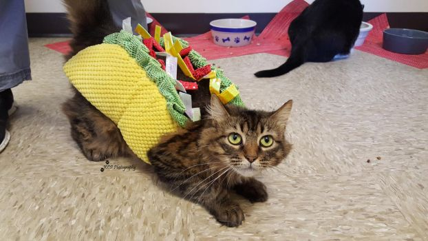 Have You Ever Put a Cat in a Taco Suit? by GoneOverWolf