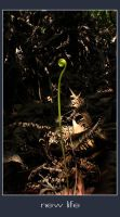 New Life by MarcWasHere
