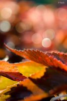 Iphone Windows Phone Android HD Wallpapers by YadavThyagaraj