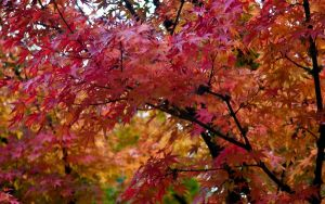 Fall Colors by redwolf