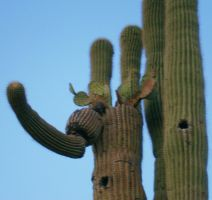 Saguaro with Beavertail Cactus by JimSTARDUST