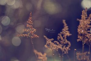 Img6652 by tigerelune