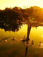 sunset by the mangroves by moregrogpleaze
