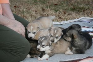 Pile o' Puppies by greensh
