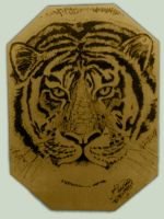 Tiger - Pyrography by ivanraposo