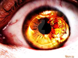 The Eye Of The Tiger by walexxx19