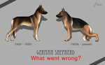 German Shepherd development by t1sk1jukka