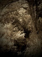 ENCHANTED FOREST by ANDYBURGESS
