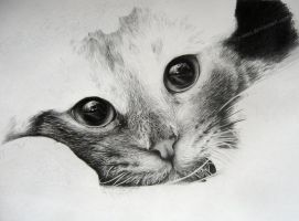 cat in progres by Sky-max