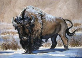 American Bison Winter by HouseofChabrier