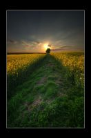rapeseed season II by theoden06