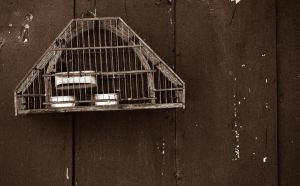 Freedom in the birdcage by William-Cordero