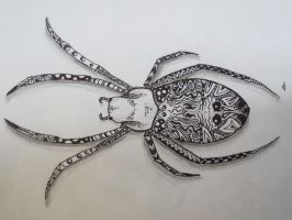 Zentangle spider by luzilla