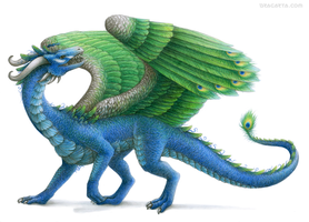 Peacock Dragon by Dragarta