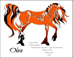 CH Oira by Everland-Stables