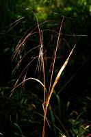 Sunlit Grass by EarthHart