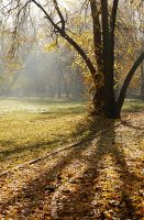Autumn Mood IV by ArgentumChloride