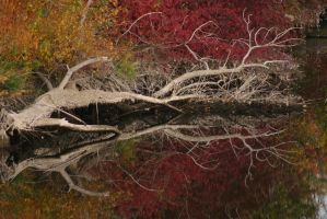 Fallen Tree Reflection 1 by FoxStox