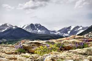 Rocky Mountain Summer by MtnMama