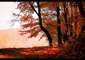 Autumn forest VI by valiunic
