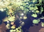 Water Lillies by LordMystirio