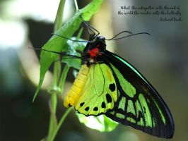 the butterfly by rajasegar
