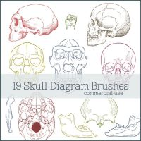 Skull Diagram Brushes by figandlily