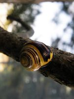 snail by WithoutName