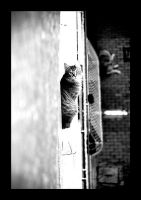 cat by Arzuhan