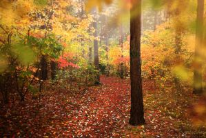 Forest in Fall by Ivencar