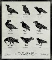 Ravens by MonicaMcClain