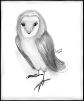 Barn Owl by Velexane
