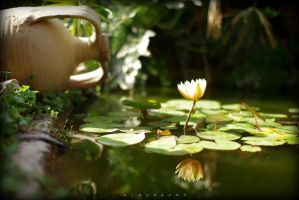 Magical Pond by alahay
