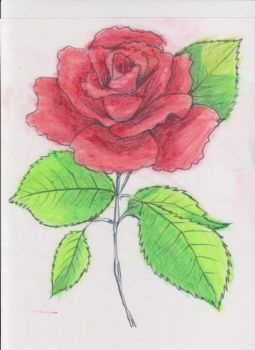 Rose_colored by CrazieLazy