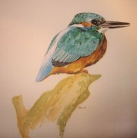 King Fisher by Sasquatch69