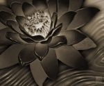 the black lotus by muzski