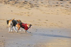 bad dogs on the beach by brijome