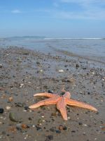 starfish on the shore by doko-stock