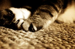 Kitten paws by jmpotter
